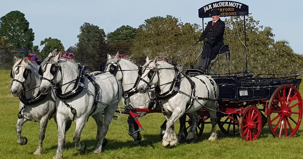 large dray drawn by four percheron heavy horses